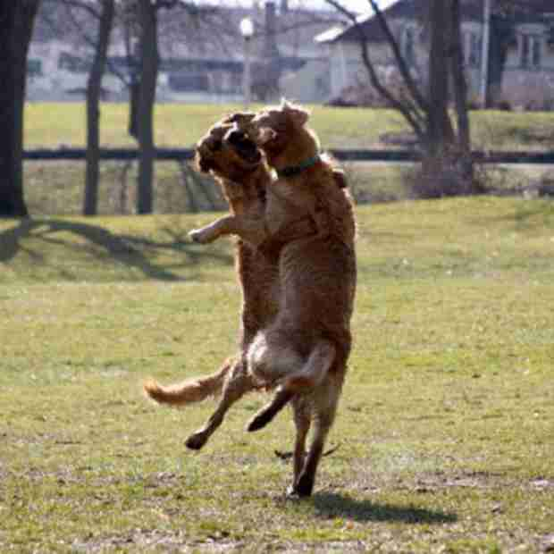 31 φωτογραφίες σκυλιών που δεν έχουν λογική! Δώστε προσοχή στην 7!