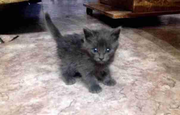 Βούτηξε μέσα σε πετρελαιοκηλίδα για να σώσει δύο γατάκια που πάλευαν για τη ζωή τους
