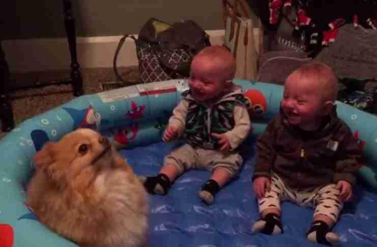 Δυο μικρά δίδυμα αδελφάκια και ένας σκύλος που κάνει κόλπα; Η συνταγή για το βίντεο της χρονιάς!