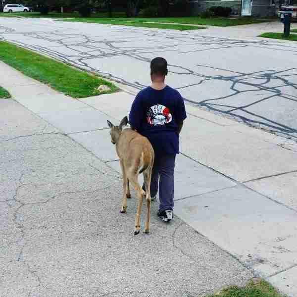 Ένα 10χρονο αγόρι κάθε πρωί πριν πάει σχολείο βοηθάει ένα τυφλό ελάφι να βρει τροφή