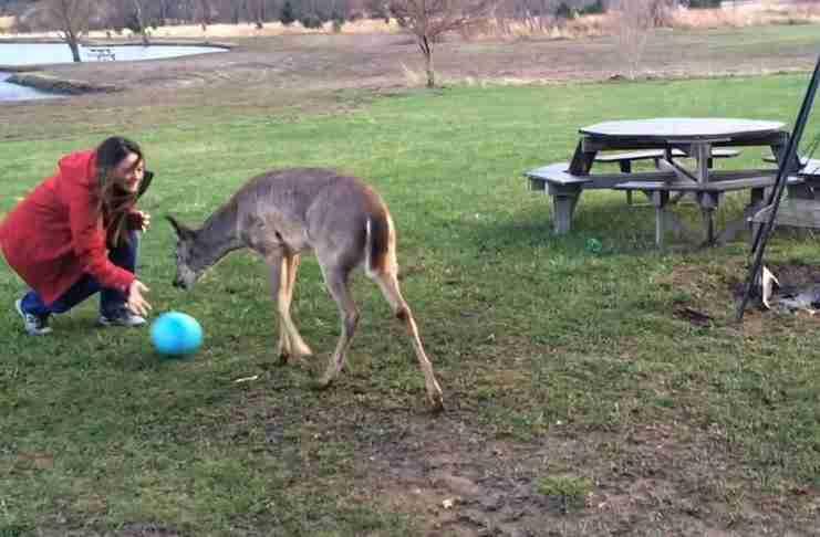 Η αντίδραση αυτού του ελαφιού μόλις βλέπει μπάλα, το πιο όμορφο πράγμα που θα δείτε σήμερα!