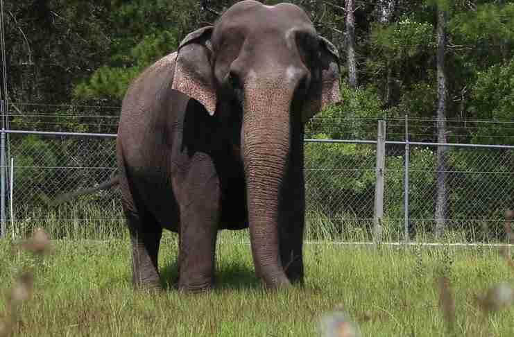 Κάποιος χτυπάει τον άνθρωπο που φροντίζει αυτόν τον ελέφαντα. Η αντίδραση του ελέφαντα; Ανεκτίμητη