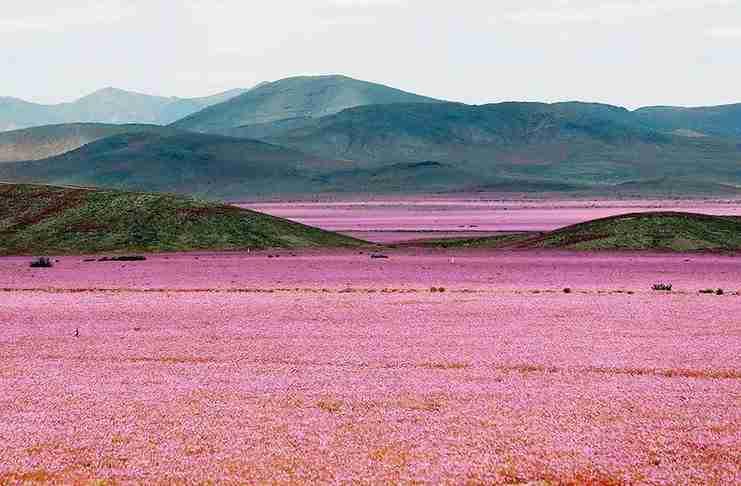 Αυτό συμβαίνει όταν πέφτει βροχή στη πιο ξερή έρημο του κόσμου!