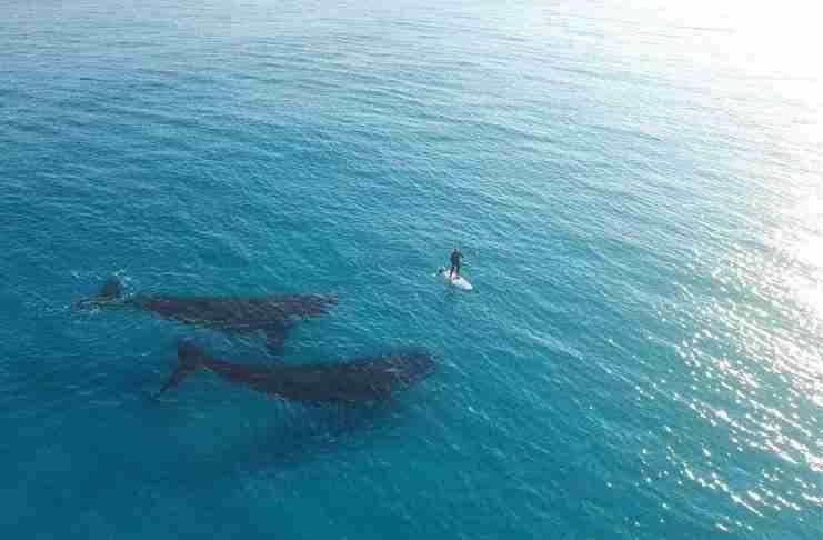 Drone κατέγραψε σε βίντεο μια από τις πιο όμορφες στιγμές που είδατε ποτέ!