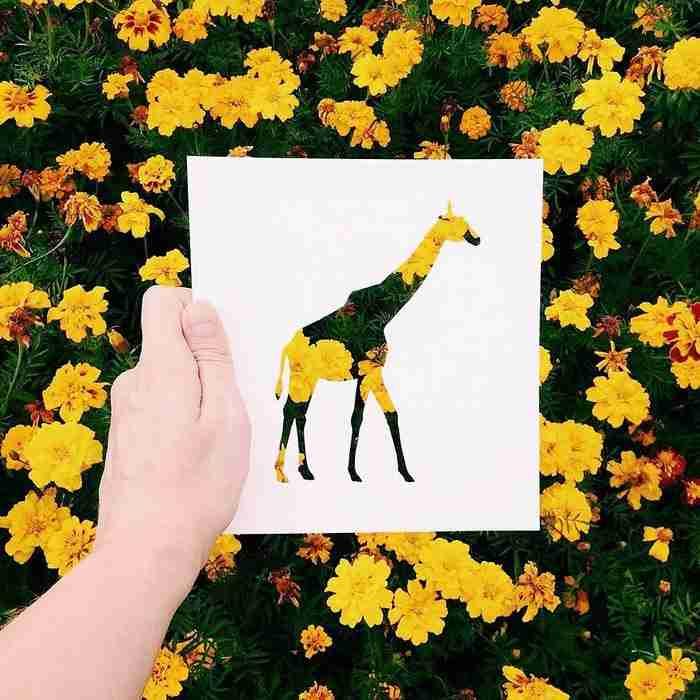 Καλλιτέχνης χρησιμοποιεί τη φύση για να προσθέσει χρώμα σε σιλουέτες ζώων