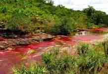 Ο πολύχρωμος ποταμός Caño Cristales στη Κολομβία