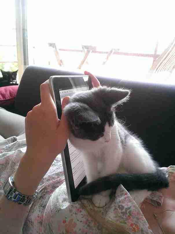 20 γάτες που δεν ενδιαφέρονται ιδιαίτερα για τον προσωπικό σας χώρο!