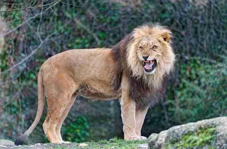Αυτό που έκαναν τρία λιοντάρια όταν είδαν ένα μικρό φοβισμένο κορίτσι μοιάζει απίστευτο!