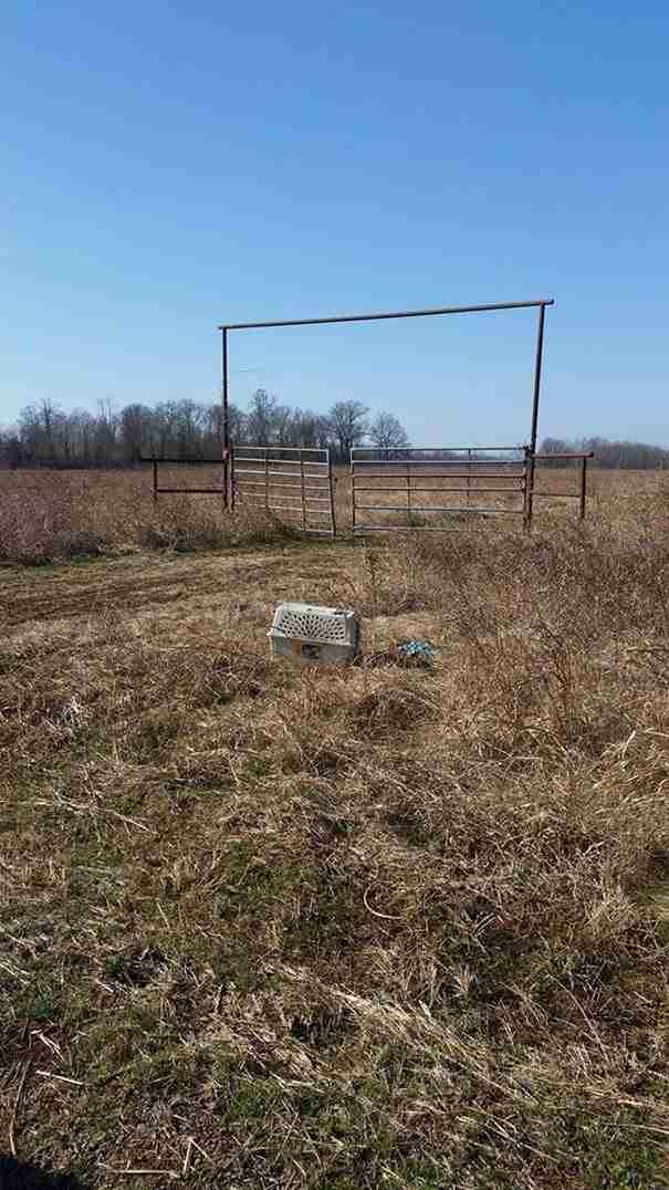 Περνώντας βρήκαν ένα μασημένο κλουβί. Αυτό που υπήρχε μέσα άλλαξε τις ζωές τους..