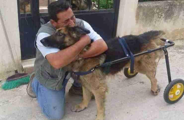 Χάρη στον Βασίλη Τζιγκούρα βλέπει τον σκύλο του να περπατάει ξανά και ξεσπάει..