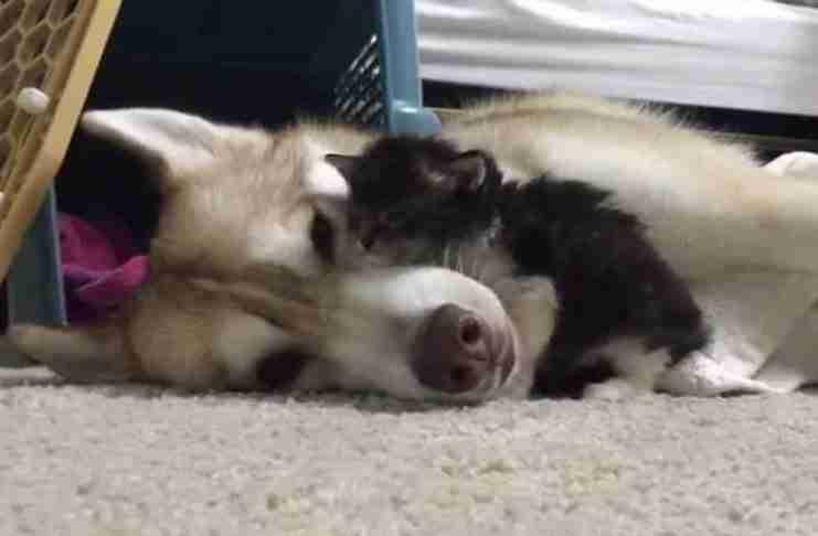 Το νεογέννητο γατάκι ήταν νευρικό στο νέο του σπίτι. Δείτε ποιος το έκανε να νιώσει καλύτερα..