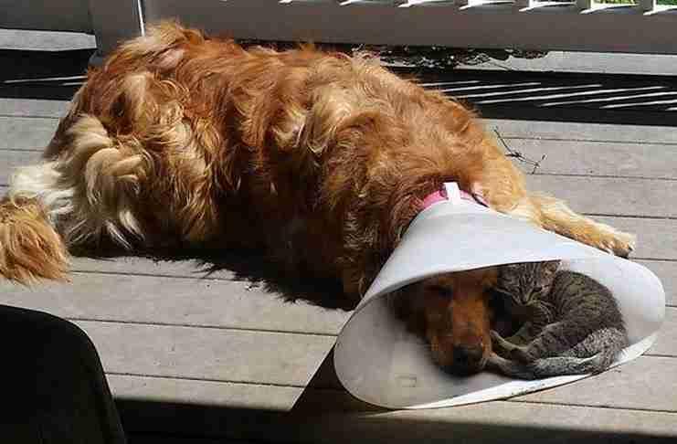 Δεν είναι υπέροχο να έχεις δίπλα σου ένα φίλο όταν τον χρειάζεσαι;