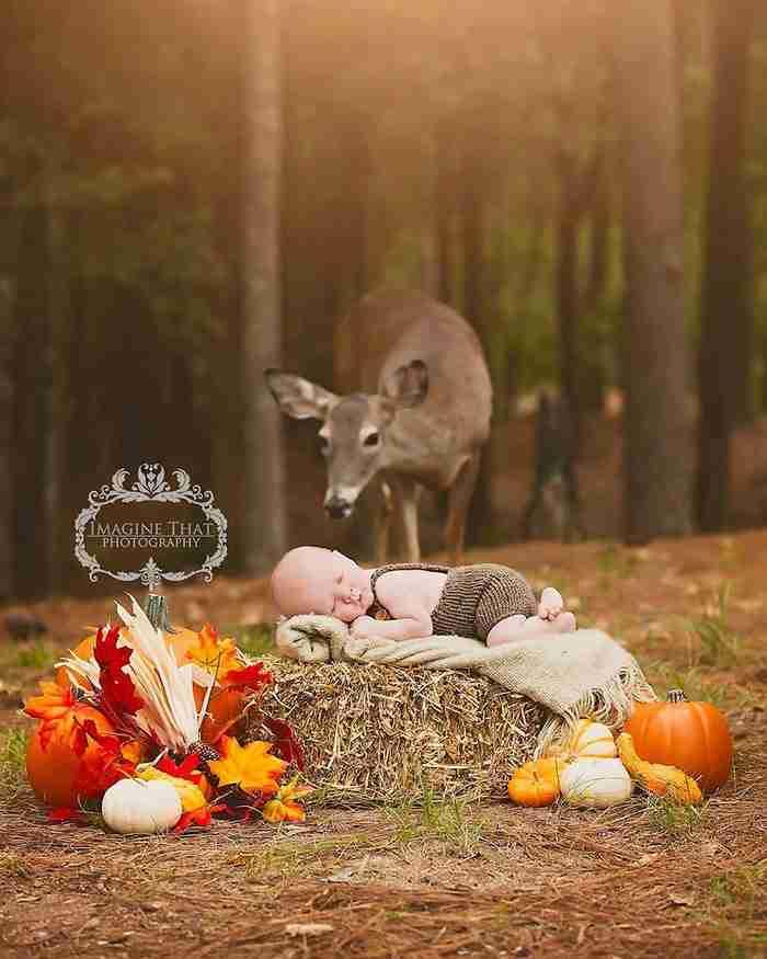 Η μαγική στιγμή που ένα ελάφι παρεμβαίνει στη φωτογράφιση ενός μωρού στο δάσος!