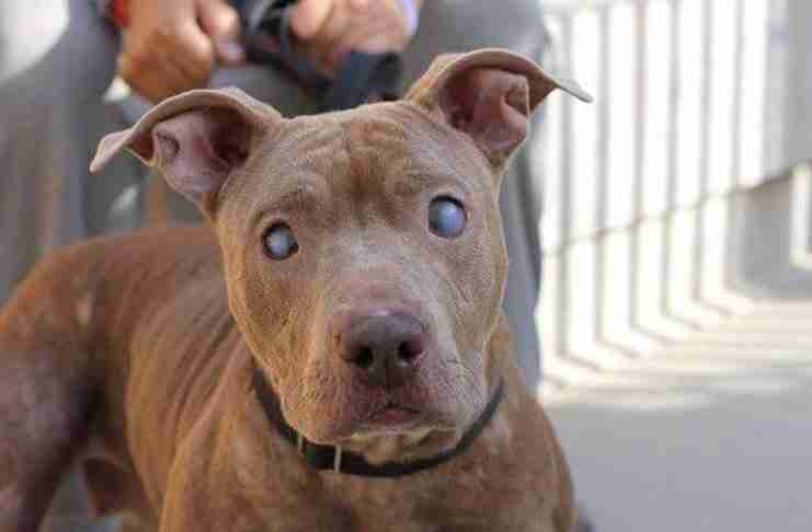 Παράτησαν αυτό το τυφλό σκυλί σε ένα παγκάκι για να πεθάνει. Αλλά δείτε το σήμερα!