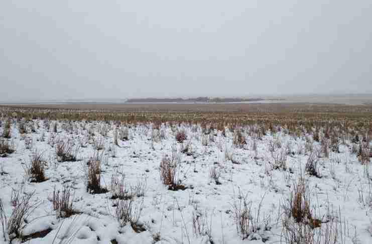 Υπάρχουν 550 πρόβατα σε αυτήν τη φωτογραφία. Μπορείτε να τα βρείτε;