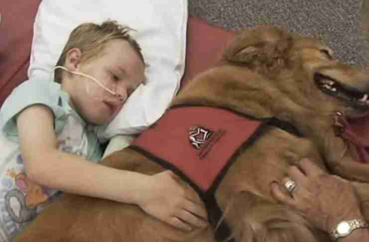 Είχαν χάσει κάθε ελπίδα να βοηθήσουν τον γιο τους. Μέχρι που κάποιος τους είπε να του πάρουν σκύλο..