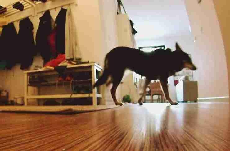 Τοποθέτησε μια κάμερα για να δει τι κάνει ο σκύλος της όταν λείπει. Τι είδε; Είναι πολύ συγκινητικό..