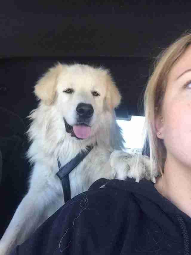 Σκύλος αρνείται να αφήσει μόνο του τον ετοιμοθάνατο φίλο του που τον χτύπησε αυτοκίνητο