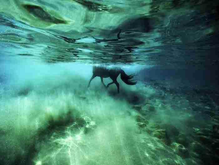 Είναι η ωραιότερη υποβρύχια φωτογράφηση που έγινε ποτέ. Και θα σας κόψει την ανάσα!