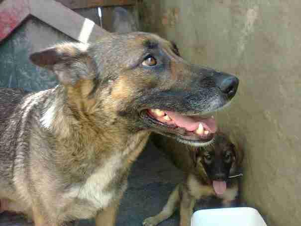 Αυτό το σκυλί έσκαψε μια τρύπα σε ένα τάφο και ξάπλωσε μέσα. Ο λόγος είναι συγκινητικός!