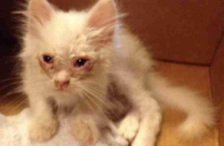 Αυτό το γατάκι βρέθηκε ετοιμοθάνατο στην άκρη του δρόμου. Απλά δείτε πως είναι σήμερα!
