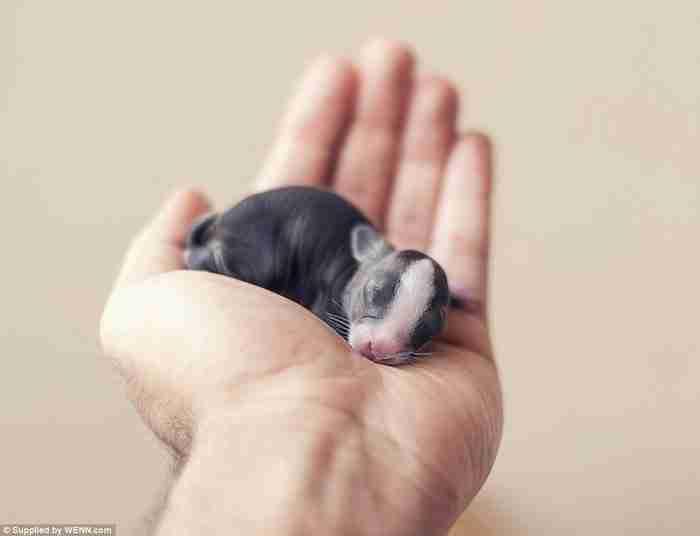 Από νεογέννητο σε μωρό: Φωτογράφος καταγράφει τις πρώτες 30 ημέρες της ζωής ενός κουνελιού.