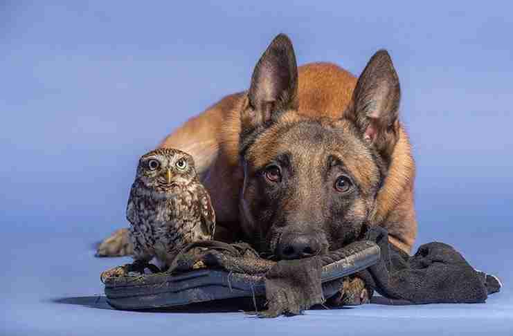 Φωτογράφος καταγράφει την συγκινητική φιλία μιας κουκουβάγια και ενός σκύλου!