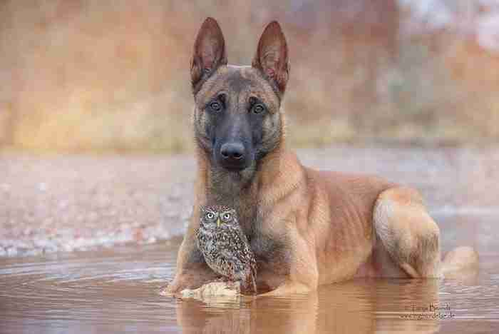 Φωτογράφος καταγράφει την συγκινητική φιλία μιας κουκουβάγιας και ενός σκύλου!