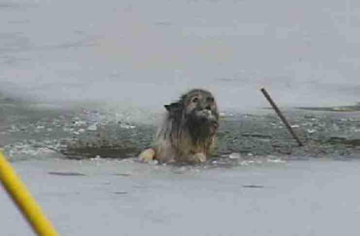 Οι περαστικοί άκουσαν ένα σκύλο να ουρλιάζει για βοήθεια. Χρειάζονταν απεγνωσμένα βοήθεια..