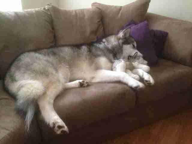 Αυτό το σκυλί έχει μεγαλώσει με το αγαπημένο του παιχνίδι. Και είναι αξιολάτρευτο..