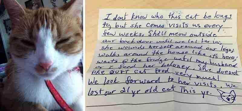 Η γάτα έλειπε όλη νύχτα. Όταν πήγε σπίτι το πρωί, από το λουρί κρέμονταν ένα σημείωμα..
