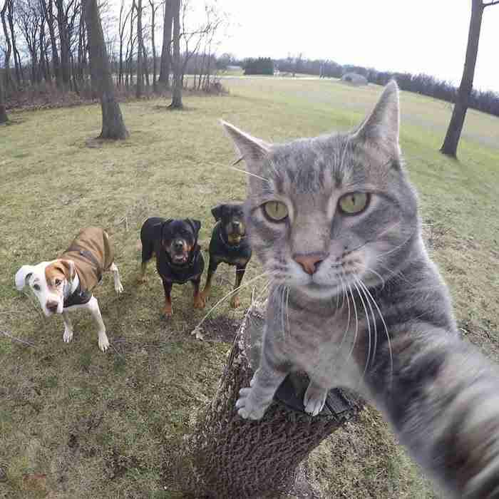 Αυτός ο γάτος βγάζει καλύτερες Selfies από όλους μας