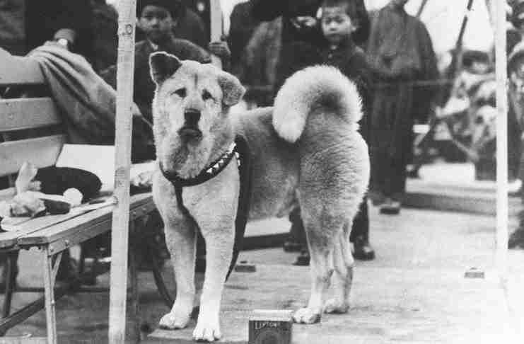 Χάτσικο: Η συγκινητική ιστορία του σκύλου που έγινε σύμβολο αφοσίωσης και αγάπης