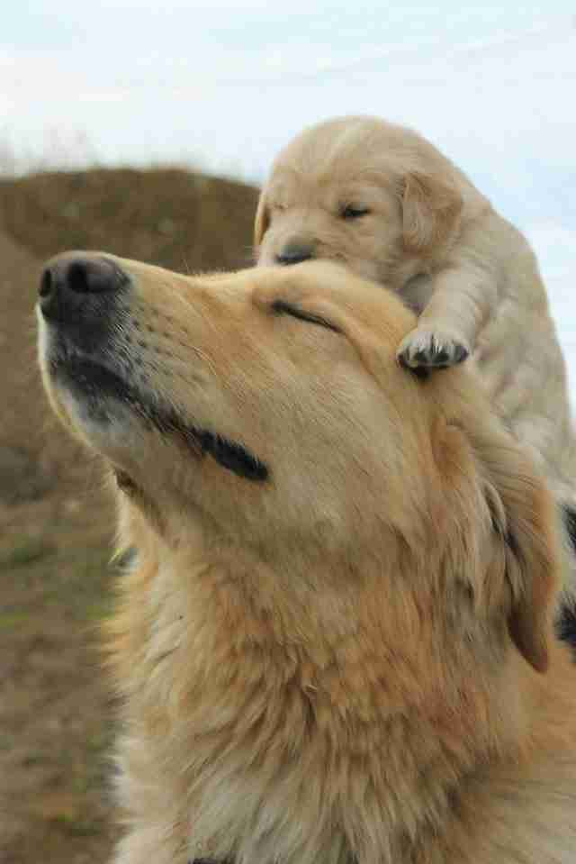Όλοι αγαπούν τη μαμά τους. Ακόμη και τα κουτάβια ...