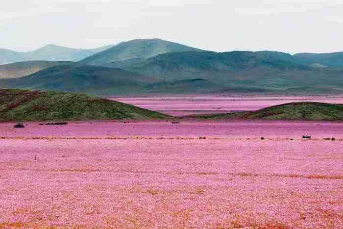 Ένα «εξωγήινο μνημείο» στη μέση της ερήμου. Βρίσκεται στο πιο ξηρό σημείο του πλανήτη..