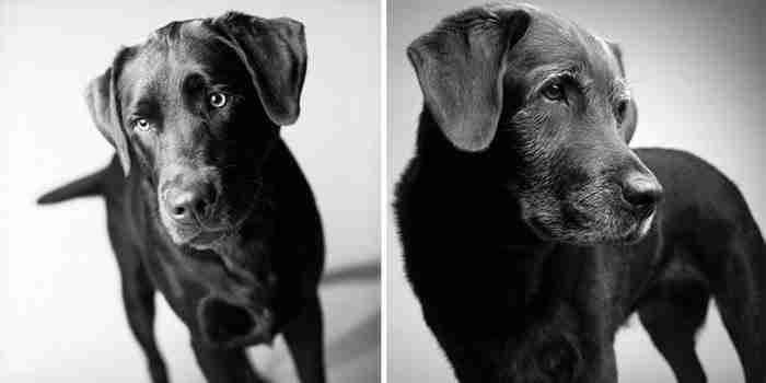 Πώς γερνούν τα σκυλιά: Μια συναρπαστική και πολύ συγκινητική φωτογράφιση