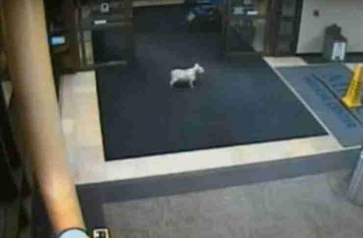 Σκύλος περπάτησε δυο μίλια και τρύπωσε στο νοσοκομείο για να δει την άρρωστη ιδιοκτήτρια του