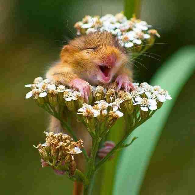 Ο κόσμος ανήκει σε αυτούς που χαμογελούν!