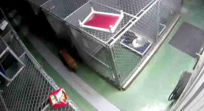 Ένα θηλυκό σκυλί το σκάει από το κλουβί του για να παρηγορήσει δυο τρομαγμένα κουτάβια
