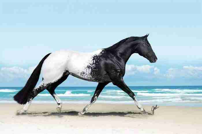 15 εντυπωσιακά όμορφα άλογα!