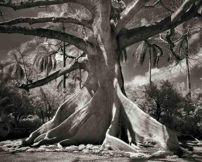 Μια γυναίκα πέρασε 14 χρόνια φωτογραφίζοντας τα γηραιότερα δέντρα στον κόσμο.