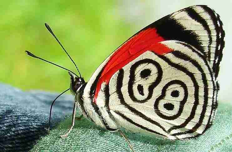 Αυτή η πεταλούδα έχει το Νο 88 στα φτερά της!