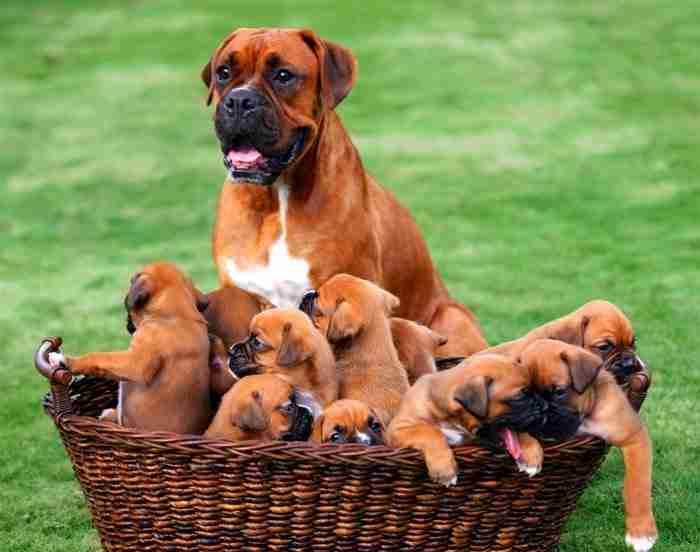 Δικαίωμά σου να μη συμπαθείς τα ζώα, υποχρέωσή σου να τα σέβεσαι..