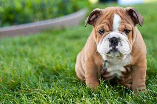 Τα 20 πιο χαριτωμένα κουτάβια στον κόσμο!
