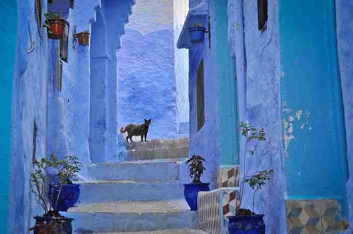 Υπάρχει μια πόλη στο Μαρόκο που είναι ολόκληρη βαμμένη μπλε! Σαν στρουμφοχωριό!