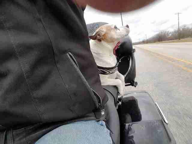 Είδε έναν άντρα να κακοποιεί βάναυσα ένα μικρό σκυλάκι. Προσέξτε τι έκανε στη συνέχεια..
