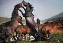 20 από τις καλύτερες φωτογραφίες του National Geographic. Η 19 είναι καταπληκτική!