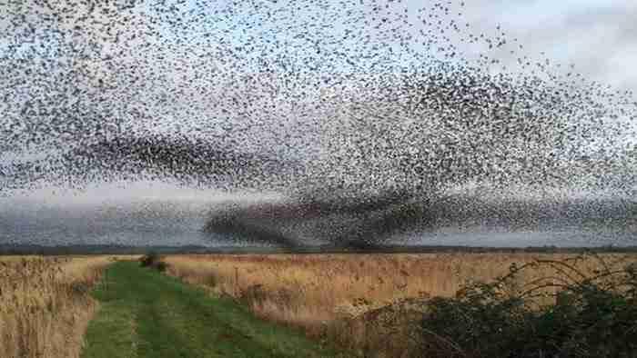 70.000 πουλιά πετούν συγχρονισμένα στον αέρα σε ένα μαγευτικό βίντεο!