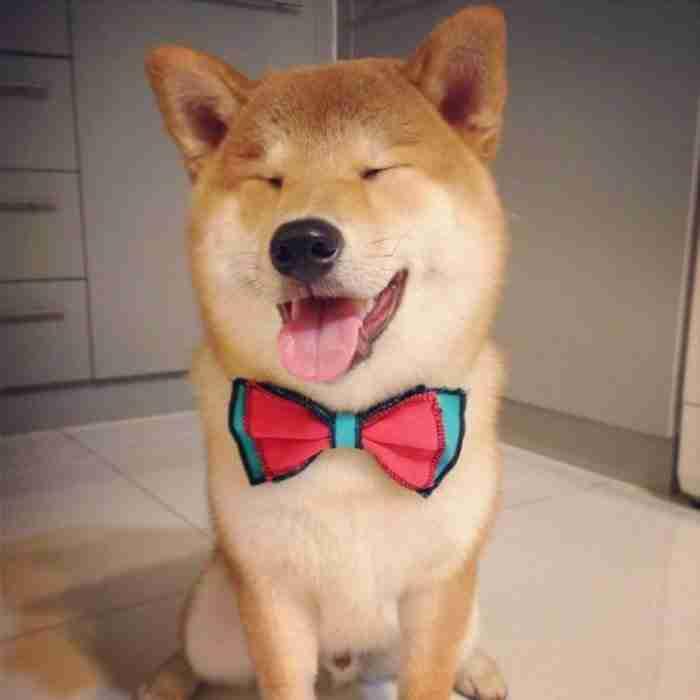 24 από τα πιο ευτυχισμένα σκυλιά στον κόσμο!