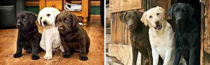 15 κουτάβια που.. μεγάλωσαν πάρα πολύ γρήγορα!